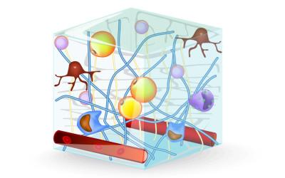 Team Connective Tissue